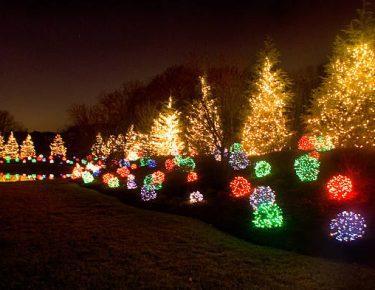 multicolored LED lighting on backyard vegetation